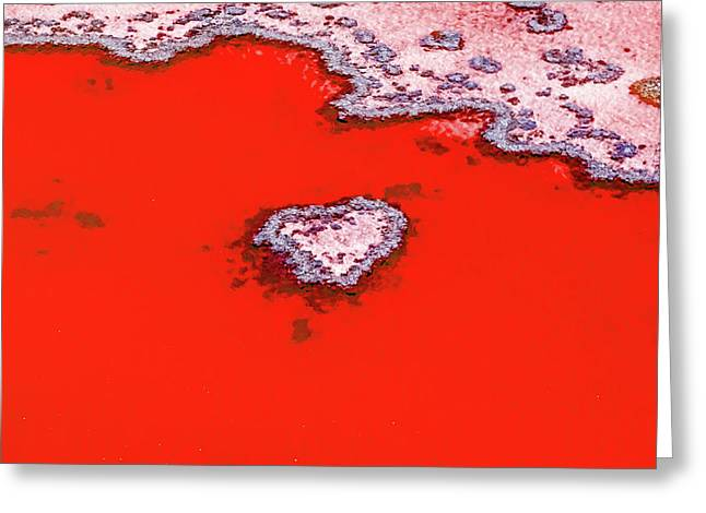 Blood Red Heart Reef Greeting Card