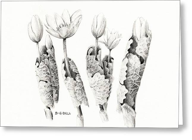 Bloodroot Group Greeting Card