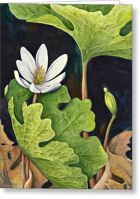 Bloodroot Greeting Card by Margit Sampogna