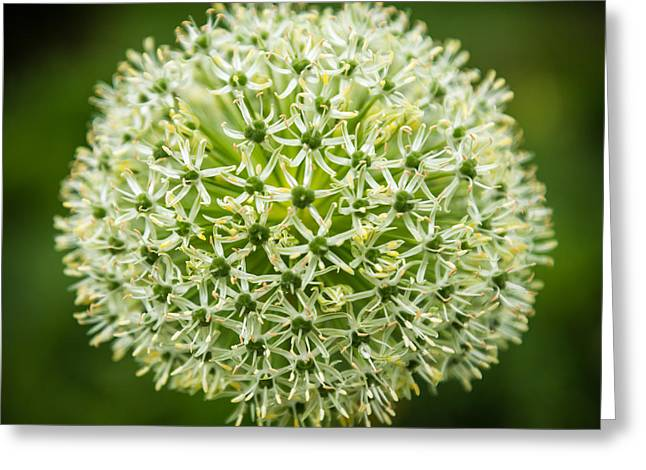 Bloom Ball Greeting Card by Kristopher Schoenleber
