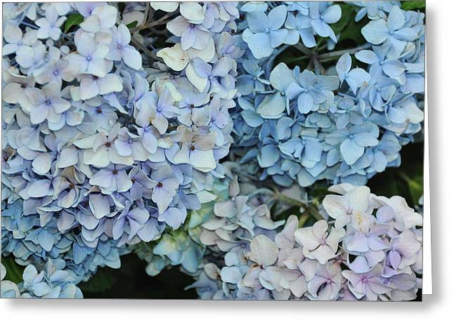 Bloom Cluster Greeting Card by JAMART Photography