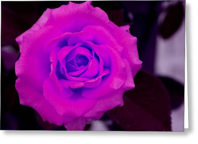 Bloom N Love-abstract Greeting Card by Debbie May