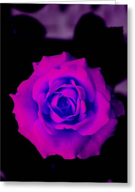 Bloom N Love Greeting Card by Debbie May