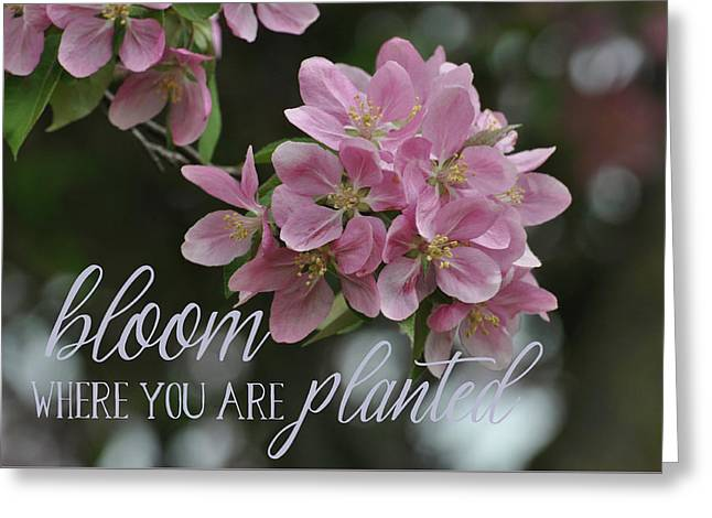 Bloom Where You Are Planted Greeting Card by Seasons Photography