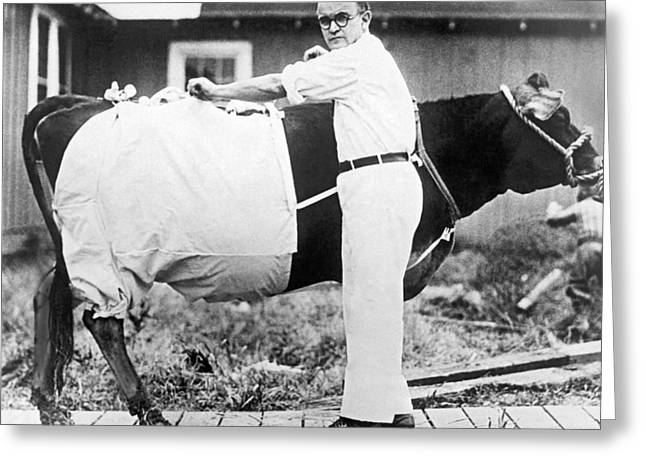 Bloomers For Cows Greeting Card by Underwood Archives