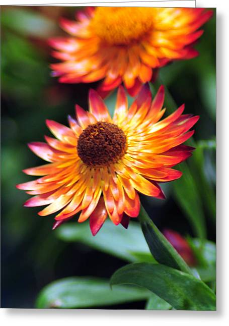 Bloomin' Loverly Greeting Card by J DeVereS
