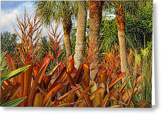 Blooming Bromeliads By H H Photography Of Florida Greeting Card by HH Photography of Florida