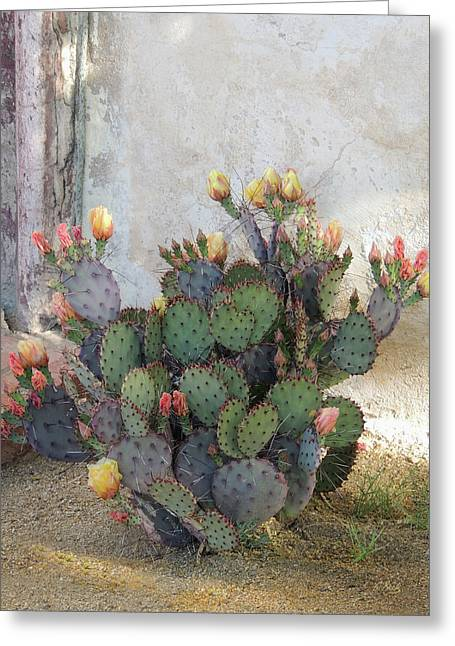 Blooming Cactus Greeting Card by Gordon Beck