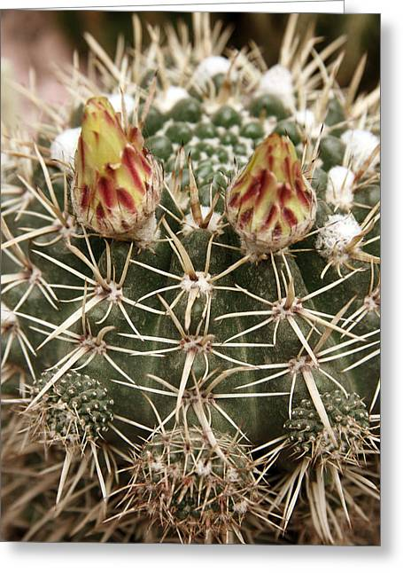 Blooming Cactus1 Greeting Card