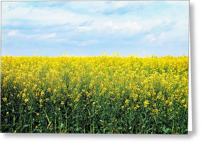 Blooming Canola - Photography Greeting Card