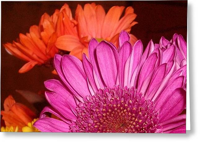 Blooming Colors Greeting Card by LDPhotography Stephanie Armstrong