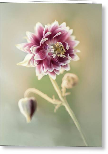 Blooming Columbine Flower Greeting Card