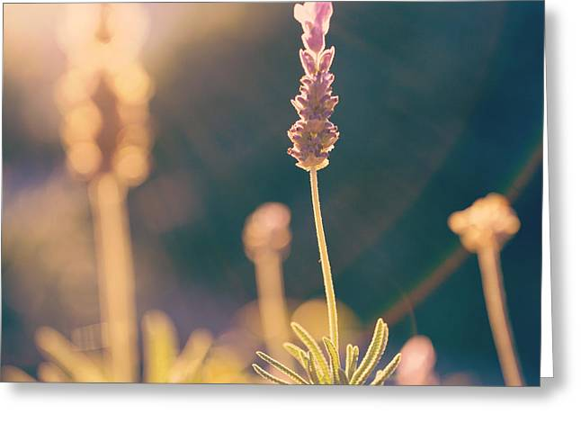 Greeting Card featuring the photograph Blooming Lavender - Hipster Photo Square by Charmian Vistaunet