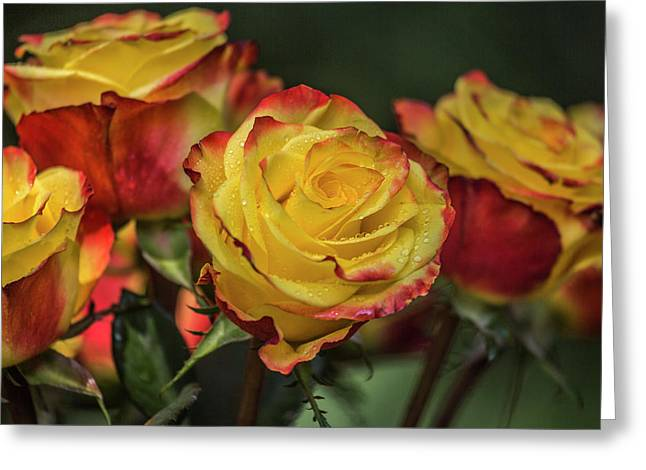 Oh My God It's Another  Rose Image Greeting Card by Betsy Knapp