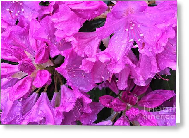 Blooming Rhododendron Greeting Card