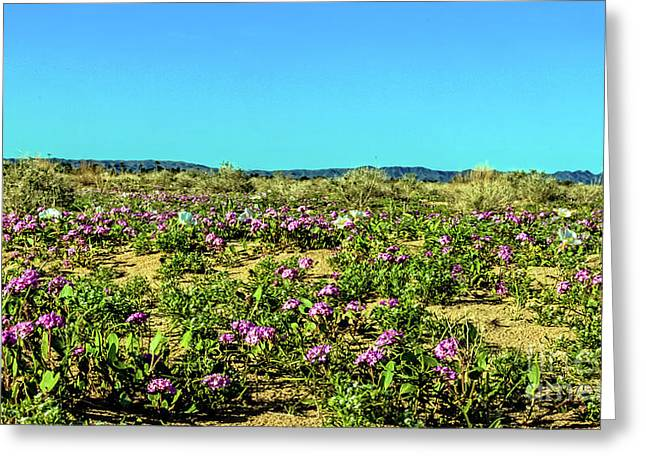 Greeting Card featuring the photograph Blooming Sand Verbena by Robert Bales