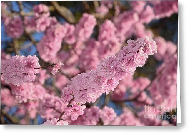 Blooming Spring Blossoms By Kaye Menner Greeting Card by Kaye Menner