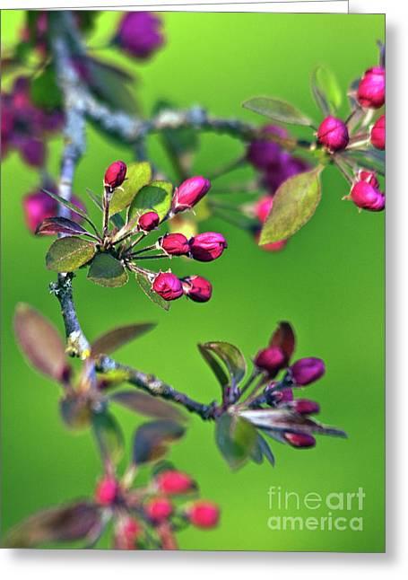 Blooming Spring Poetry Greeting Card