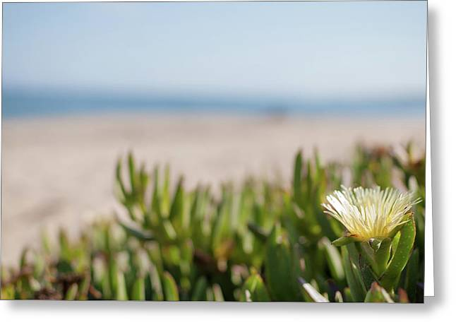 Blooming Succulent Ground Cover On Californian Beach Greeting Card by Bradley Hebdon
