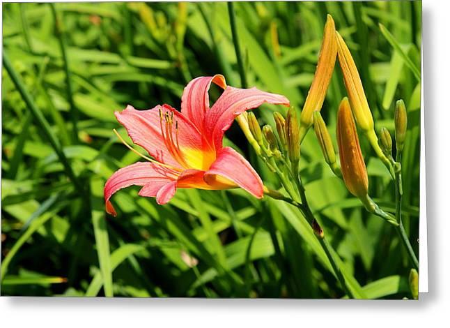 Blooming Summer Greeting Card
