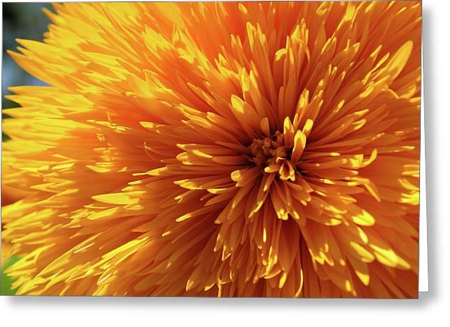 Blooming Sunshine Greeting Card
