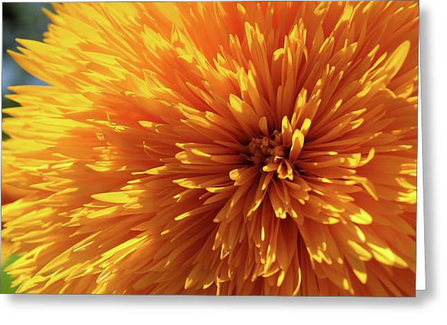 Blooming Sunshine Greeting Card by Marie Leslie