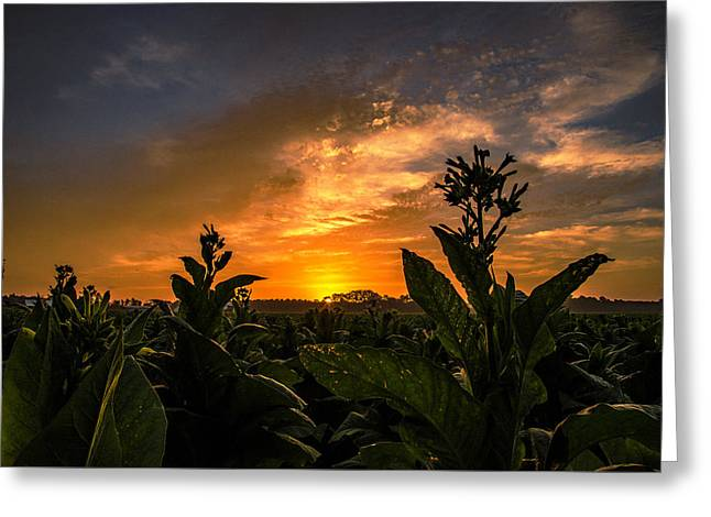 Blooming Tobacco Greeting Card