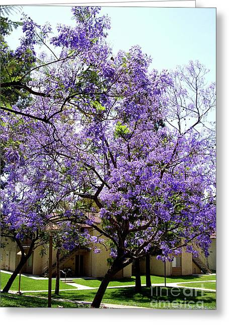 Blooming Tree With Purple Flowers Greeting Card