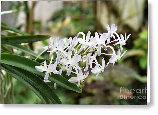 Blooming White Flower Spike Greeting Card