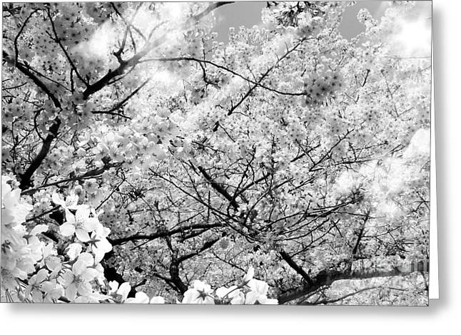 Blossom Black And White Greeting Card by Stefano Senise