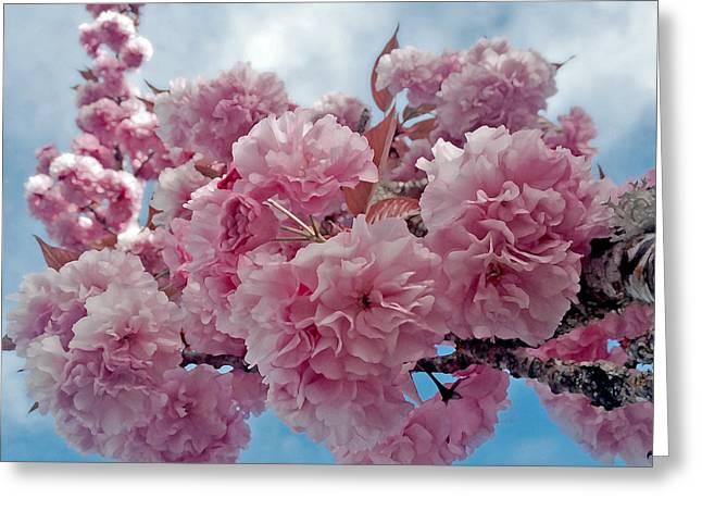 Blossom Bliss Greeting Card by Gwyn Newcombe