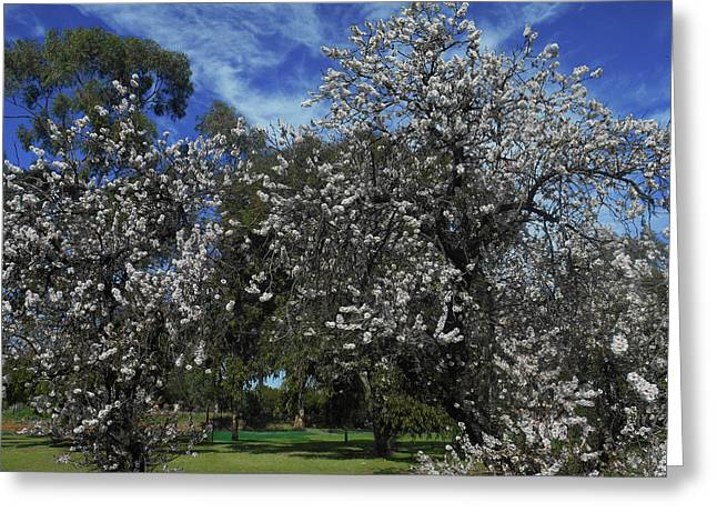 Greeting Card featuring the photograph Blossom Bomb by Mark Blauhoefer