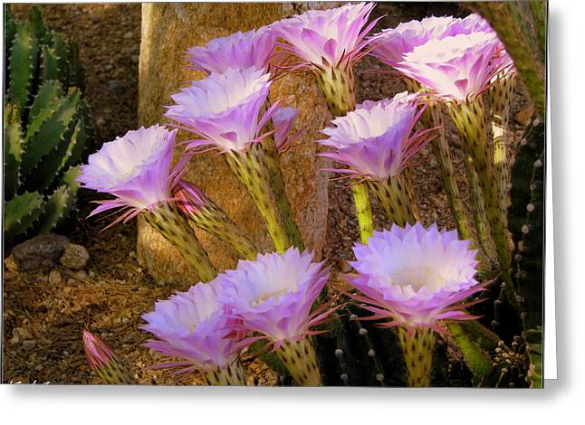 Blossom Forth Greeting Card