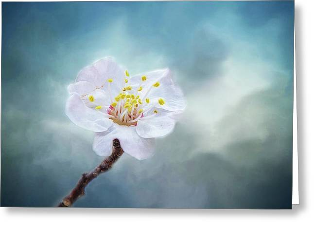 Blossom In Fog Greeting Card