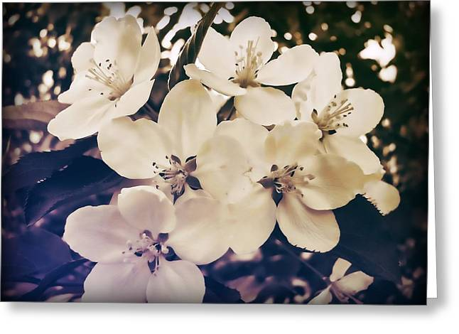 Blossom Greeting Card by JAMART Photography