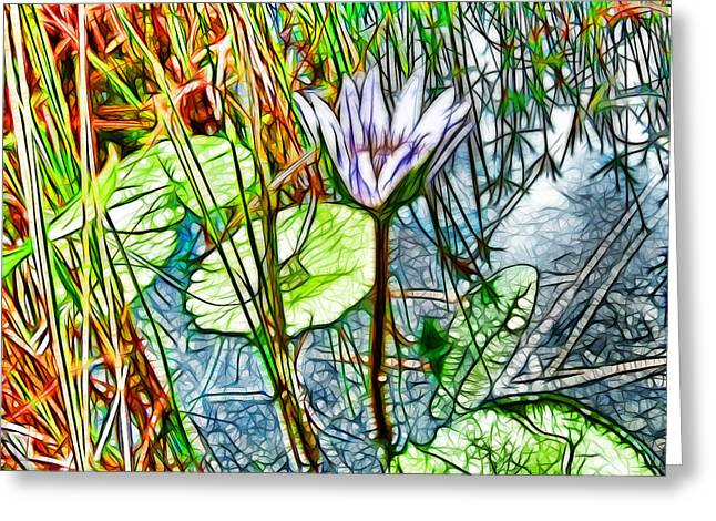 Blossom Lotus Flower In Pond Greeting Card by Lanjee Chee