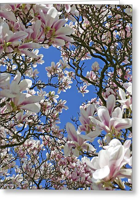Blossom Magnolia White Spring Flowers Photography Greeting Card by Artecco Fine Art Photography