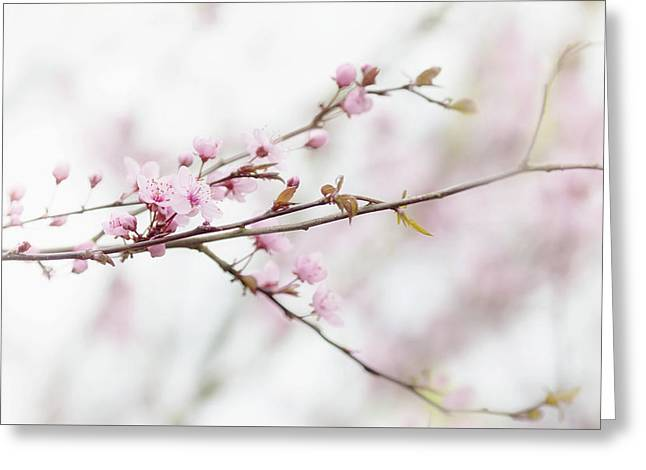 Greeting Card featuring the photograph Blossom Pink by Rebecca Cozart
