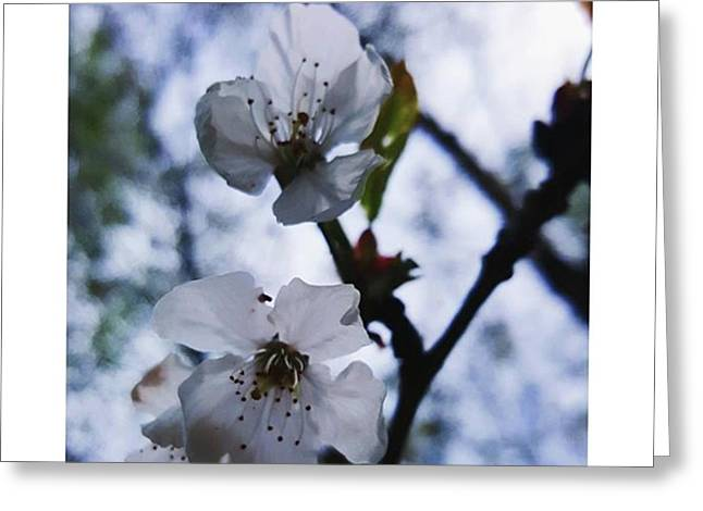 #blossom #spring #macro #flower #pretty Greeting Card by Natalie Anne