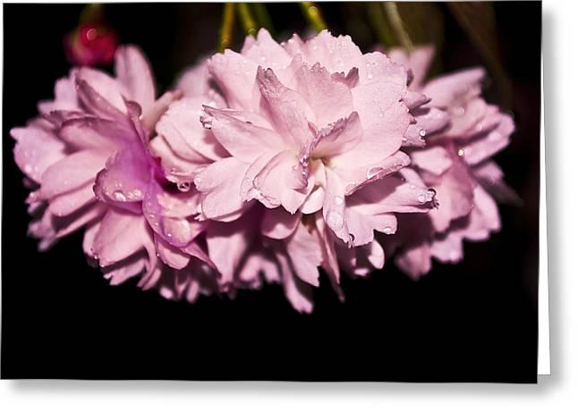 Blossom Greeting Card by Svetlana Sewell