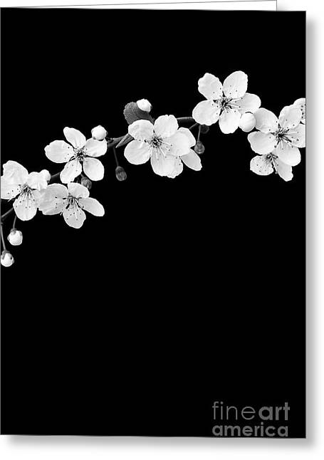 Blossom Greeting Card by Tim Gainey