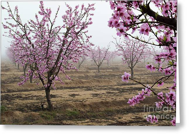 Blossom Trail Greeting Card