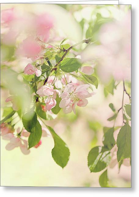 Blossom Tree Greeting Card by Margaret Goodwin