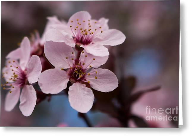 Blossom Trio Greeting Card