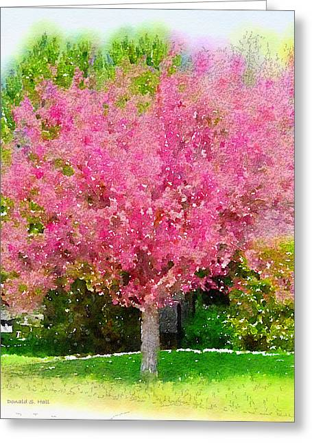 Blossoming Crabapple Tree Greeting Card by Donald S Hall