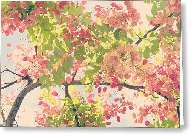 Greeting Card featuring the photograph Blossoming Pink Shower Tree - Hipster Photo Square by Charmian Vistaunet