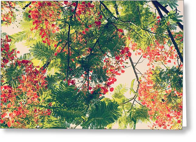 Greeting Card featuring the photograph Blossoming Royal Poinciana Tree - Hipster Photo Square by Charmian Vistaunet