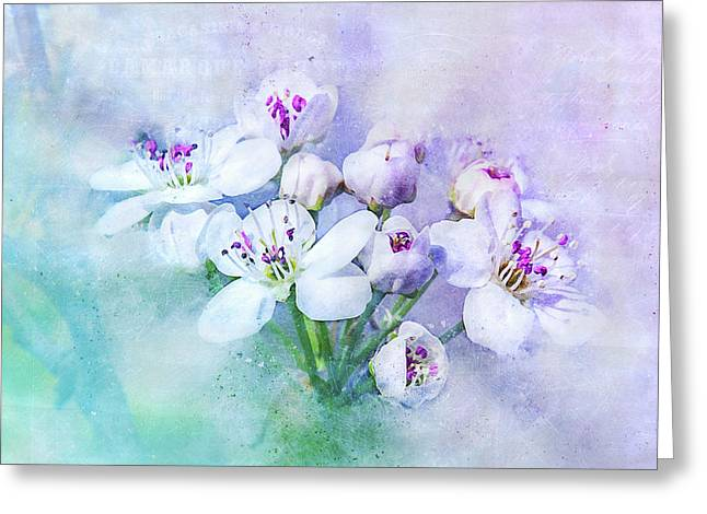 Blossoming Spring Greeting Card