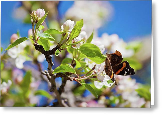 Blossoms And Butterfly Greeting Card
