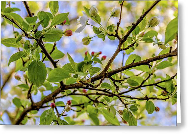Blossoms And Leaves Greeting Card